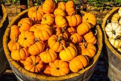 Mini Pumpkin Squash Barrels Lizenzfreie Stockbilder