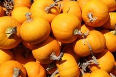 Mini Pumpkin Squashes Stock Photography