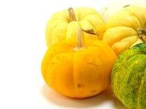 Mini pumpkin Royalty Free Stock Image