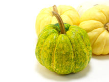 Mini pumpkin Stock Image
