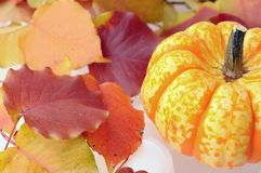 Pumpkin and yellow leaves Royalty Free Stock Images