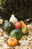 Mini pumpkins. And yellow leafs Royalty Free Stock Image