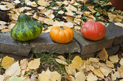 Mini pumpkins. In several colors Royalty Free Stock Photo