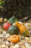 Mini pumpkins. Several mini pumpkins on yellow leafs Royalty Free Stock Images