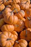 Mini Pumpkins. A pile of mini pumpkins stock images