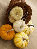Mini Pumpkins Stock Photography