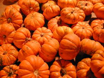Mini Pumpkins. A pile of mini pumpkins Stock Image
