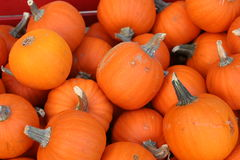 Mini Pumpkins. A pile of Mini Pumpkins for Fall Royalty Free Stock Photo