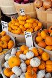 Mini Pumpkins Fotografia Stock Libera da Diritti