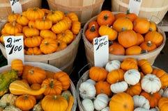 Mini Pumpkins Fotografia Stock