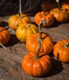 Mini Pumpkins Foto de archivo libre de regalías