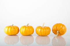 Mini-pumpkins (4)  on white with reflectio Royalty Free Stock Image
