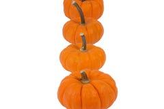 Mini Pumpkins Imágenes de archivo libres de regalías
