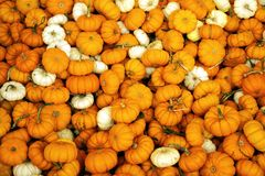 Mini Pumpkins Background stock images