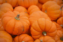 Mini Pumpkins Background Royalty Free Stock Images