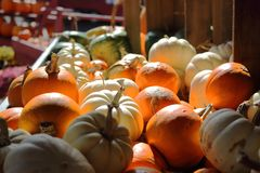 Mini Pumpkins Collection On Stand fotografie stock