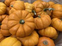 Mini Pumpkins-de achtergrond van de de herfstdankzegging stock fotografie