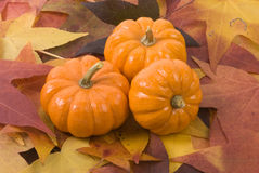 Mini-Pumpkins on Fall Leaves. A still life of three mini-pumpkins on a layer of fall leaves Stock Photos