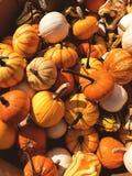 Mini pumpkins Stock Photos