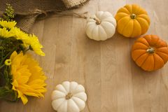 Mini Pumpkins & Flowers Background. Yellow, orange and white mini pumpkins with flowers on a wooden table Stock Photo