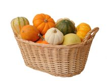 Mini pumpkins and gourd Stock Image