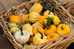 Mini pumpkins and gourd in bucket on white Royalty Free Stock Photos