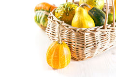 Mini pumpkins Royalty Free Stock Images