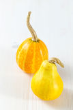 Mini pumpkins Royalty Free Stock Image