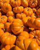 Mini Pumpkins i en grupp Royaltyfria Foton