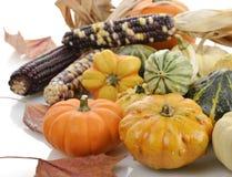 Mini Pumpkins And Indian Corn Royalty Free Stock Photos