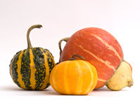 Mini Pumpkins Isolated on a White Stock Photos