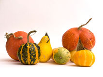 Mini Pumpkins Isolated on a White Stock Images