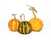Mini Pumpkins Isolated on a White Background Royalty Free Stock Photography