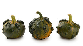 Mini Pumpkins Isolated Stock Photography
