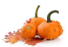 Mini Pumpkins Isolated Stock Images