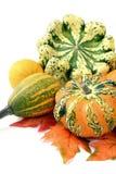 mini pumpkins on isolated white background. Halloween Stock Photos