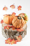 Mini pumpkins and leafs Royalty Free Stock Photography