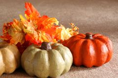 Mini Pumpkins Left fotografia stock libera da diritti
