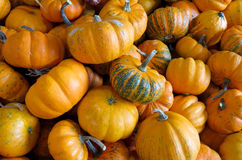 Mini pumpkins Royalty Free Stock Images
