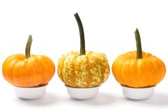 Mini pumpkins over white Stock Image