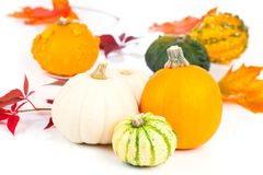 Mini pumpkins over white Royalty Free Stock Photography