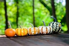 Mini Pumpkins on picnic table Stock Photo
