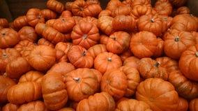 Mini Pumpkins Royalty Free Stock Photo