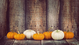 Mini pumpkins in a row on rustic background Stock Image