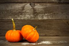 Mini pumpkins on a rustic old wood background Stock Image