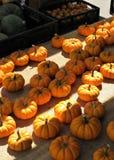 Mini pumpkins royalty free stock photos