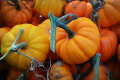 Mini Pumpkins with Stems. At the Dane County Farmers Market in Madison, WI Royalty Free Stock Image