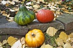 Mini pumpkins on a stone wall. Colored mini pumpkins on a stone wall Royalty Free Stock Photos
