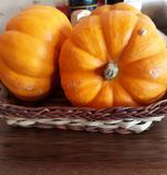 mini pumpkins royalty free stock photography