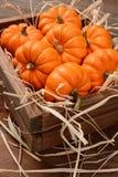 Mini Pumpkins Wood Crate Arkivbild